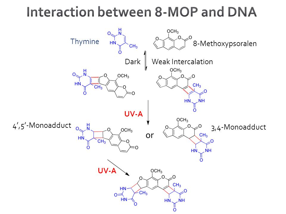 Thymine 8-Methoxypsoralen DarkWeak Intercalation UV-A 4',5'-Monoadduct 3,4-Monoadduct or