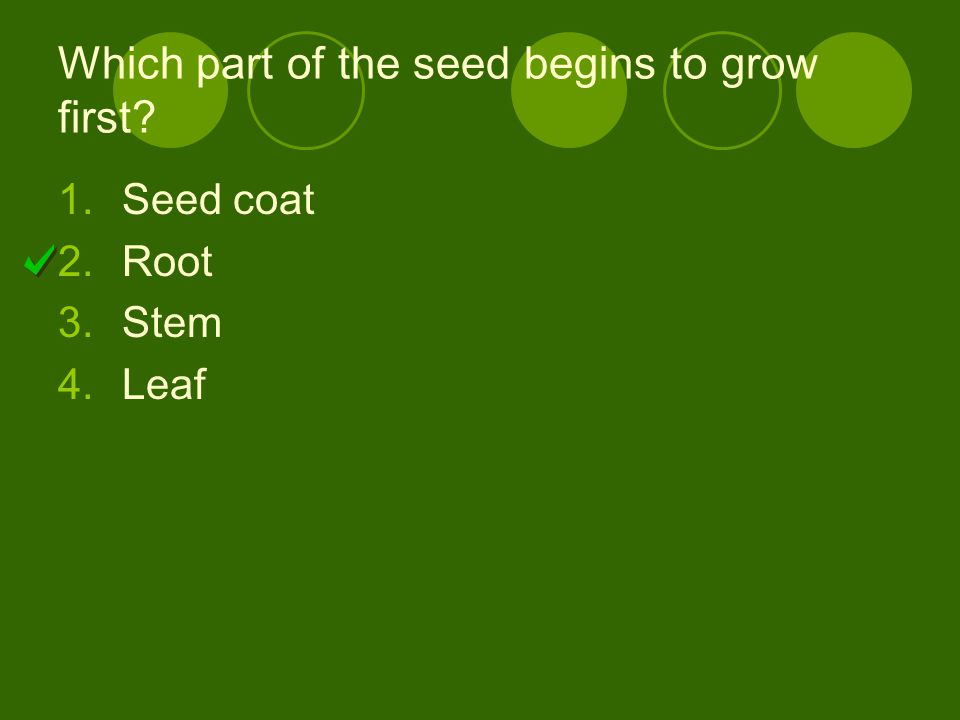 Which part of the seed begins to grow first? 1.Seed coat 2.Root 3.Stem 4.Leaf
