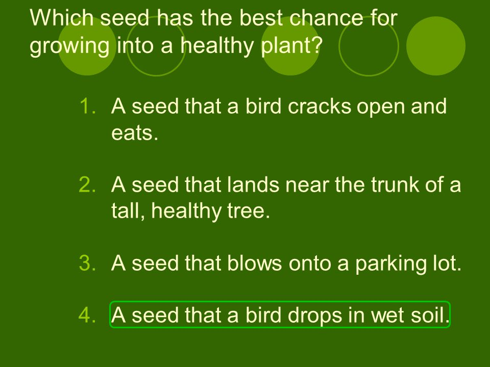 Which seed has the best chance for growing into a healthy plant? 1.A seed that a bird cracks open and eats. 2.A seed that lands near the trunk of a ta