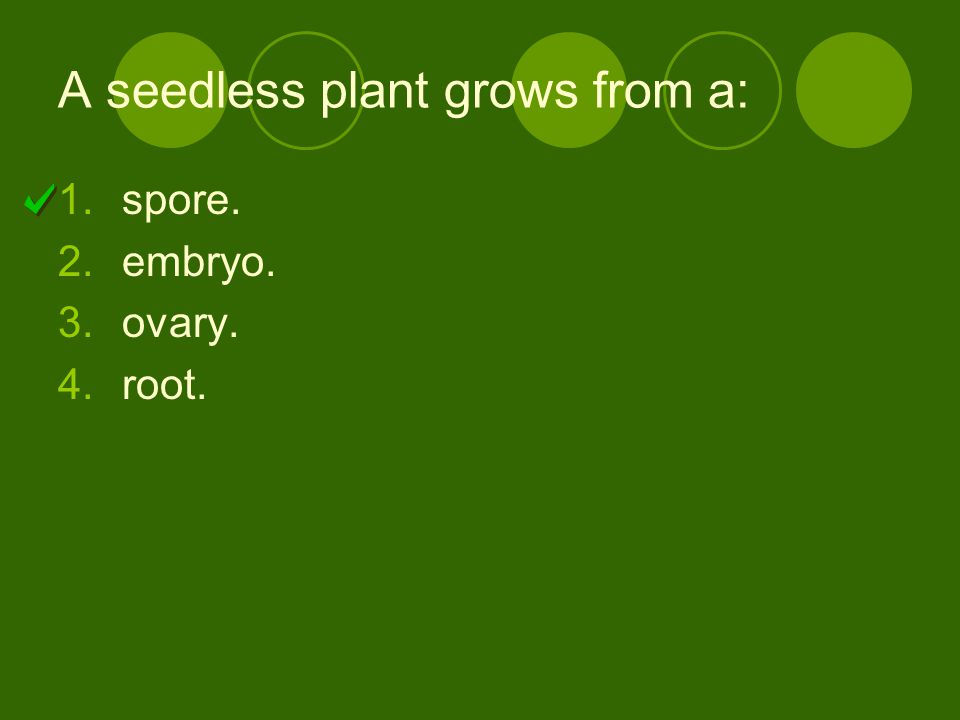 A seedless plant grows from a: 1.spore. 2.embryo. 3.ovary. 4.root.
