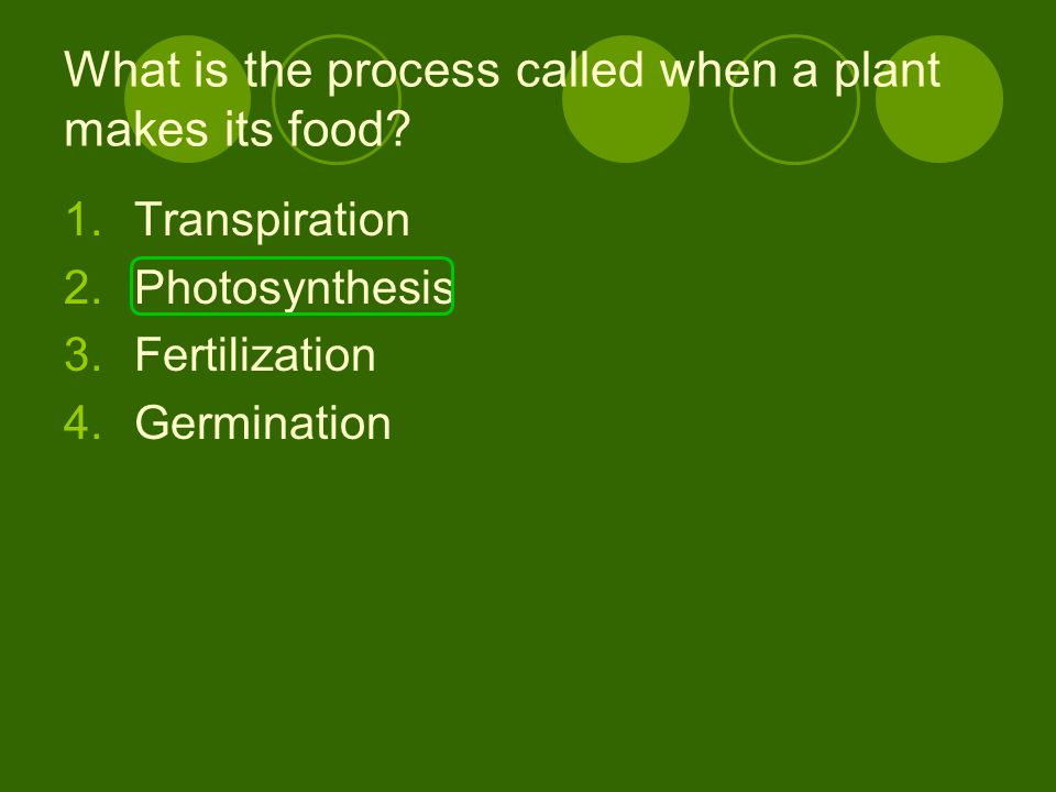 What is the process called when a plant makes its food? 1.Transpiration 2.Photosynthesis 3.Fertilization 4.Germination