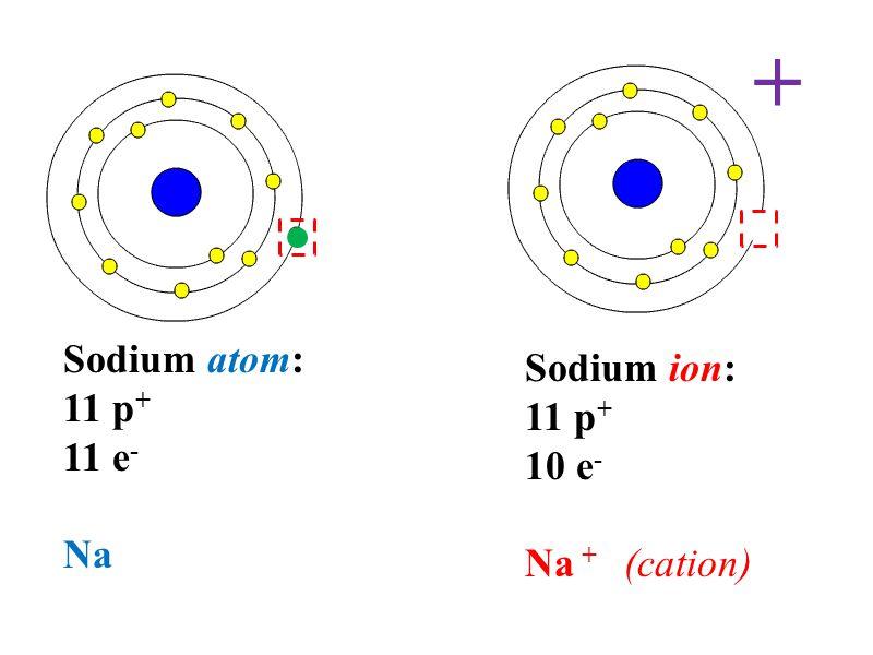 Sodium atom: 11 p + 11 e - Na Sodium ion: 11 p + 10 e - Na + (cation) +