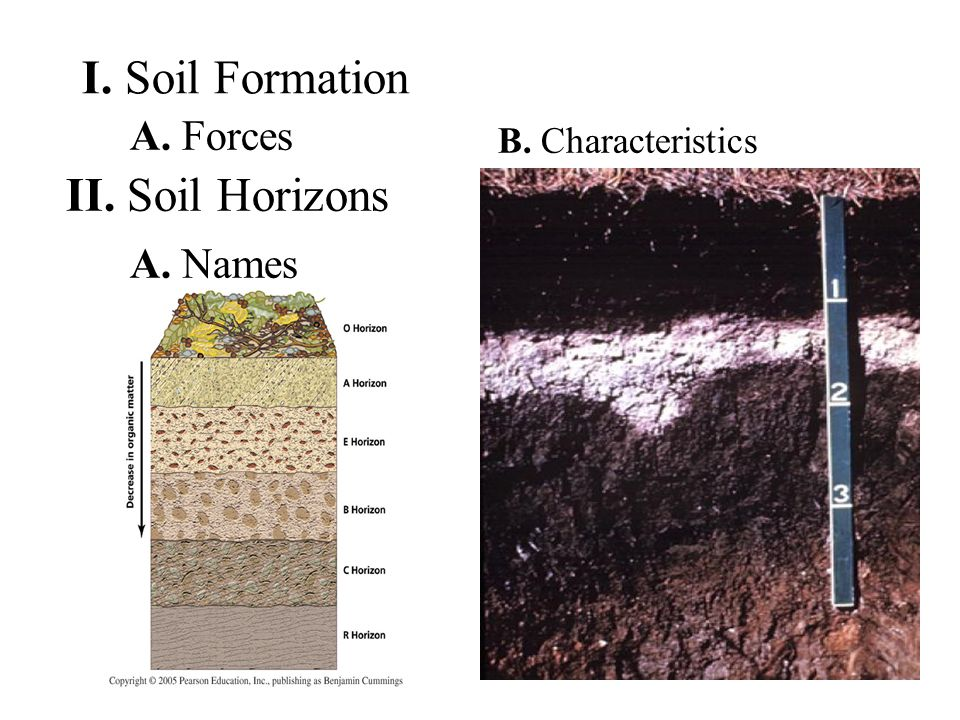 I. Soil Formation A. Forces II. Soil Horizons A. Names B. Characteristics