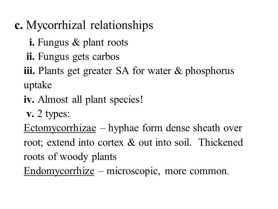 c.Mycorrhizal relationships i. Fungus & plant roots ii.