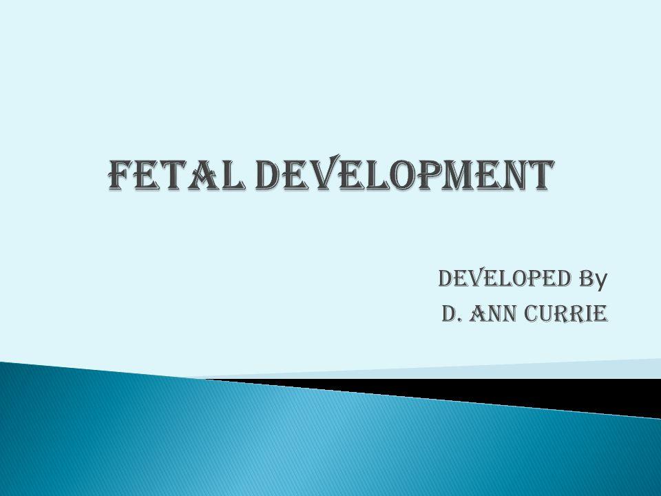 Developed b y D. Ann Currie