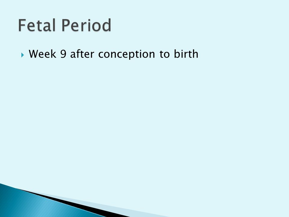  Week 9 after conception to birth