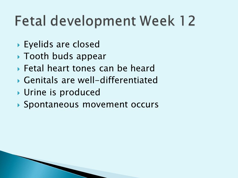  Eyelids are closed  Tooth buds appear  Fetal heart tones can be heard  Genitals are well-differentiated  Urine is produced  Spontaneous movemen
