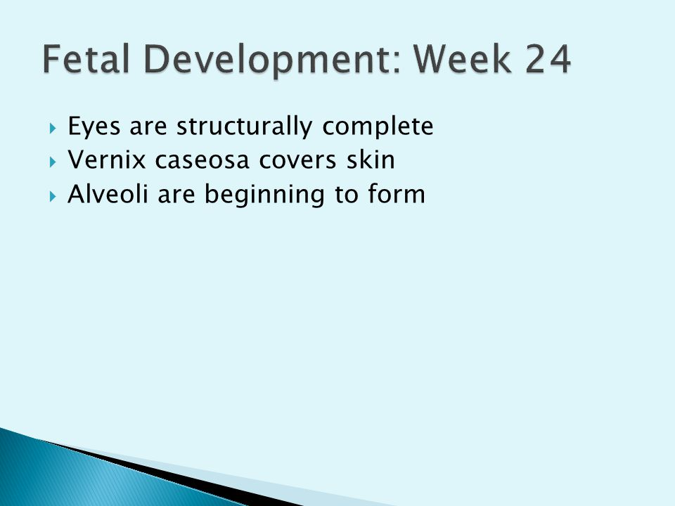  Eyes are structurally complete  Vernix caseosa covers skin  Alveoli are beginning to form