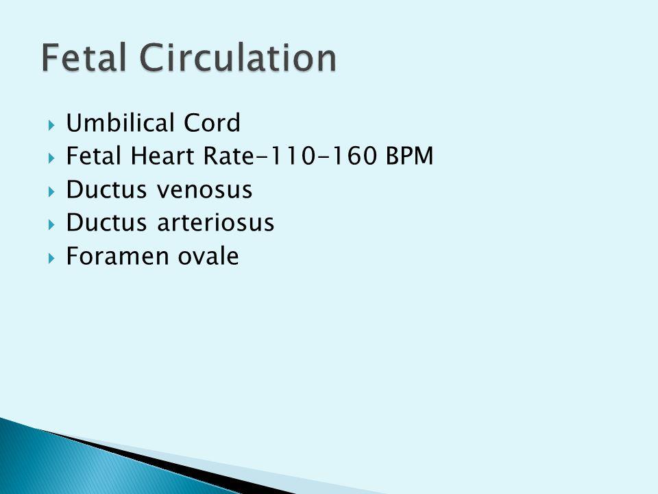  Umbilical Cord  Fetal Heart Rate-110-160 BPM  Ductus venosus  Ductus arteriosus  Foramen ovale