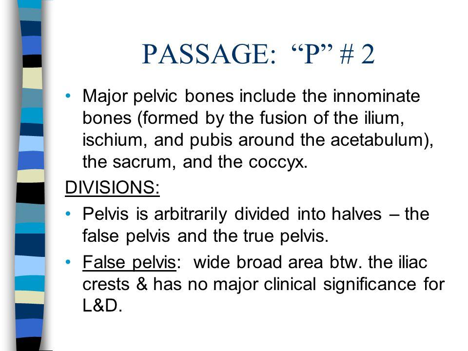 """PASSAGE: """"P"""" # 2 Major pelvic bones include the innominate bones (formed by the fusion of the ilium, ischium, and pubis around the acetabulum), the sa"""