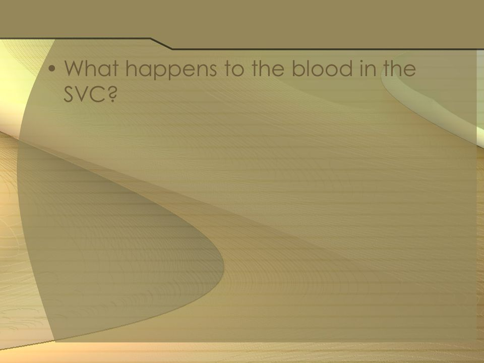 What happens to the blood in the SVC?