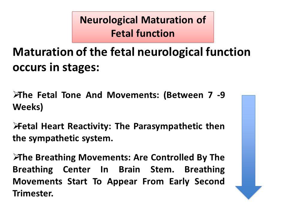 Neurological Maturation of Fetal function  The Fetal Tone And Movements: (Between 7 -9 Weeks)  Fetal Heart Reactivity: The Parasympathetic then the