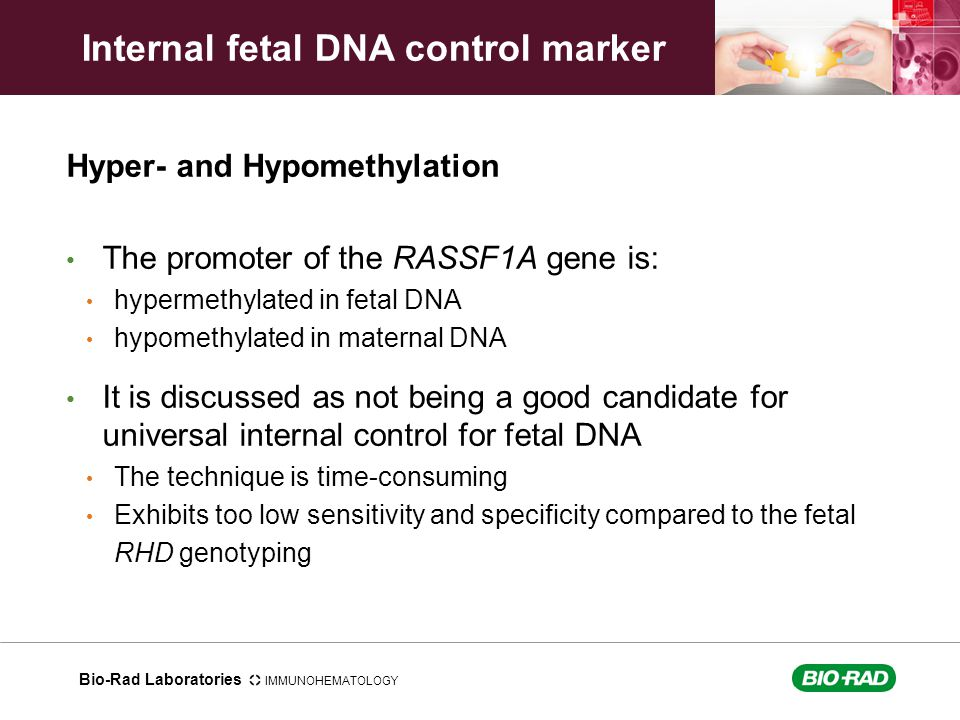 Bio-Rad Laboratories IMMUNOHEMATOLOGY Hyper- and Hypomethylation The promoter of the RASSF1A gene is: hypermethylated in fetal DNA hypomethylated in m