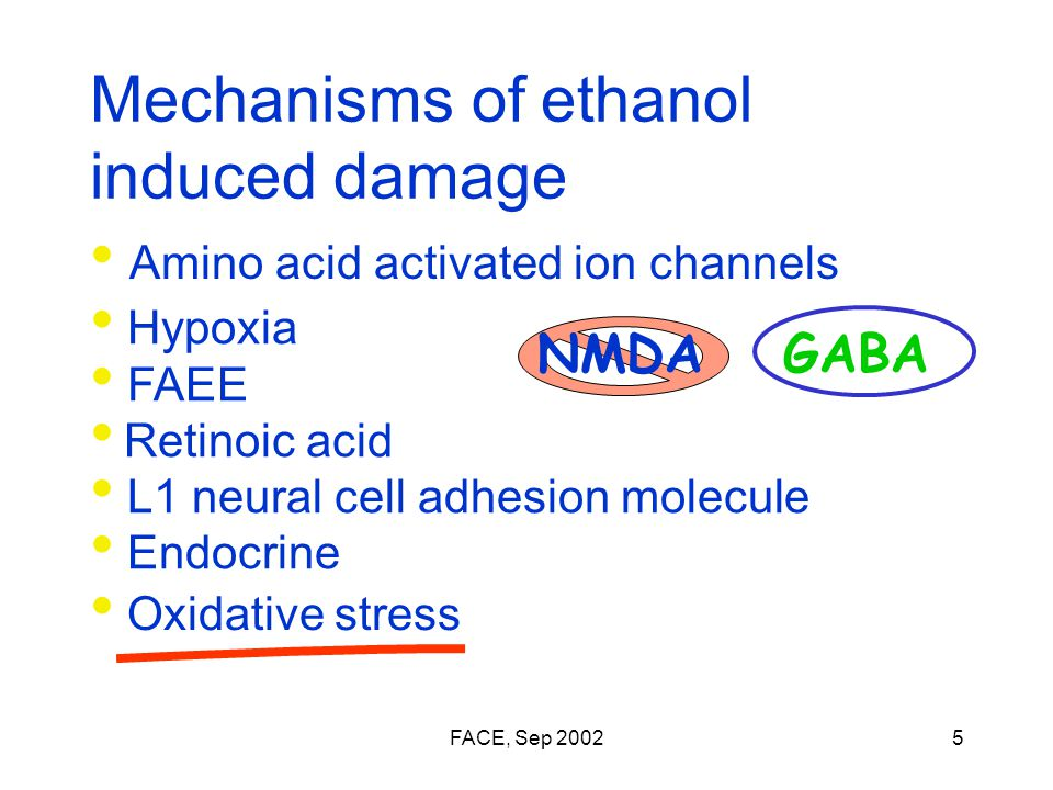 FACE, Sep 20025 Mechanisms of ethanol induced damage Amino acid activated ion channels GABANMDA Hypoxia FAEE Retinoic acid L1 neural cell adhesion molecule Endocrine Oxidative stress