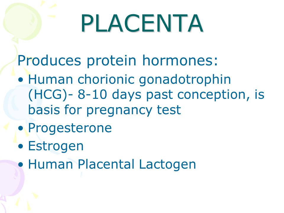 PLACENTA Produces protein hormones: Human chorionic gonadotrophin (HCG)- 8-10 days past conception, is basis for pregnancy test Progesterone Estrogen Human Placental Lactogen