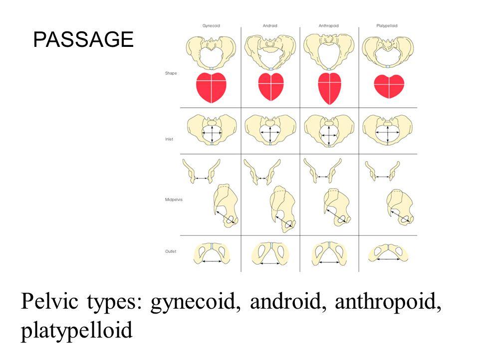 Pelvic types: gynecoid, android, anthropoid, platypelloid PASSAGE