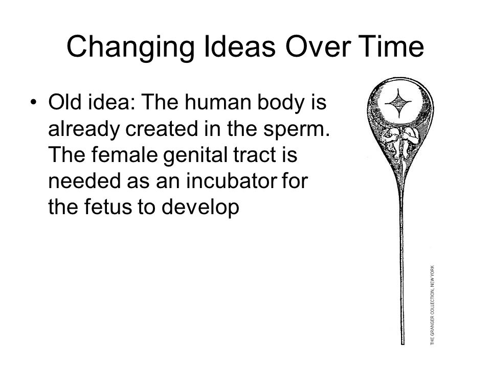 Changing Ideas Over Time Old idea: The human body is already created in the sperm. The female genital tract is needed as an incubator for the fetus to