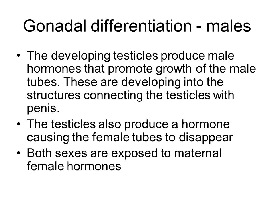 Gonadal differentiation - males The developing testicles produce male hormones that promote growth of the male tubes. These are developing into the st