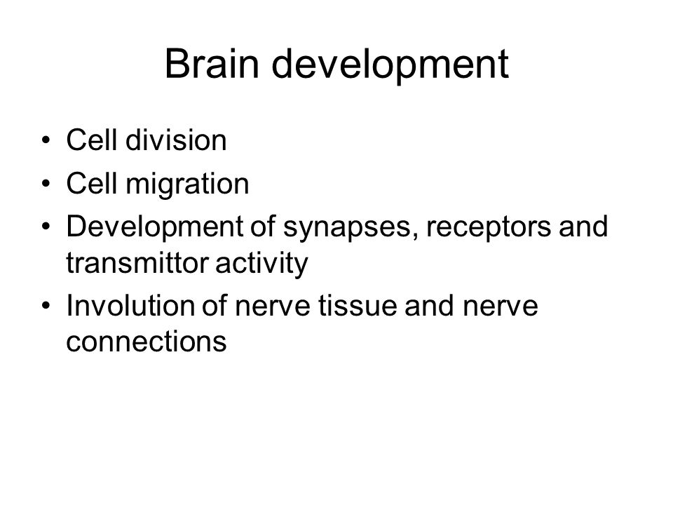 Brain development Cell division Cell migration Development of synapses, receptors and transmittor activity Involution of nerve tissue and nerve connec