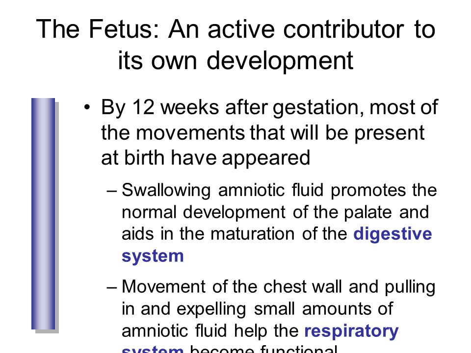 The Fetus: An active contributor to its own development By 12 weeks after gestation, most of the movements that will be present at birth have appeared