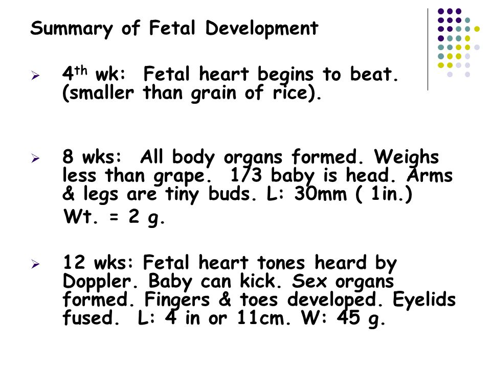 Summary of Fetal Development  4 th wk: Fetal heart begins to beat.