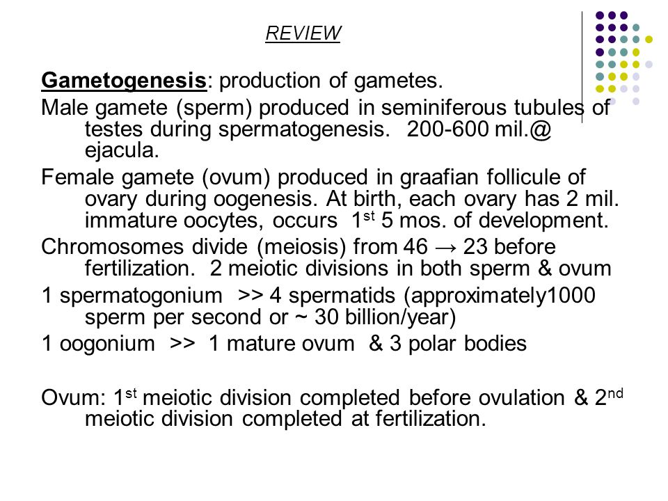 REVIEW Gametogenesis: production of gametes.