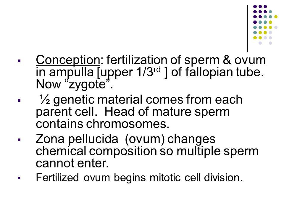 B.Cellular Multiplication Zygote undergoes mitosis (cleavage) - rapid series of cell divisions.