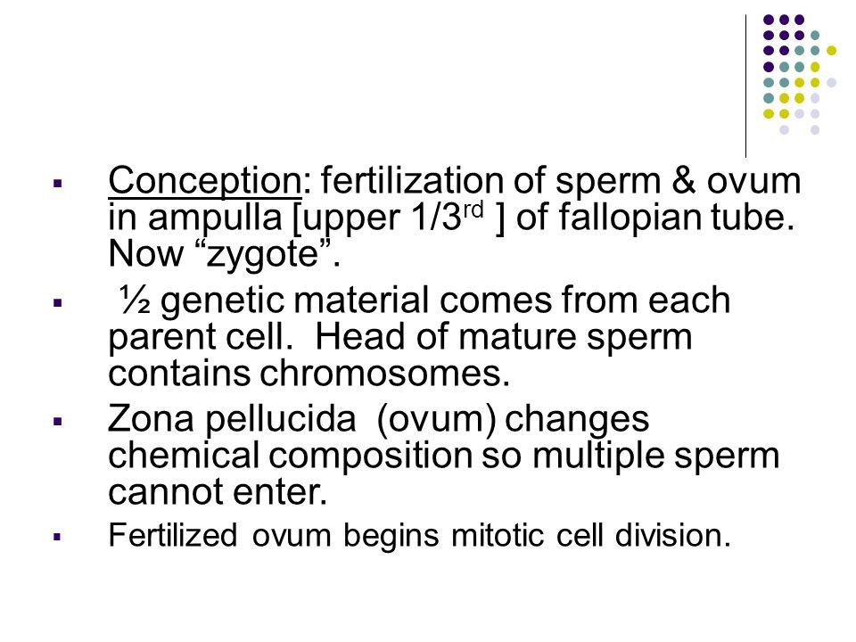 H.Amniotic Fluid 800-1200ml. Clear, yellow fluid Contains albumin, lanugo & urea.