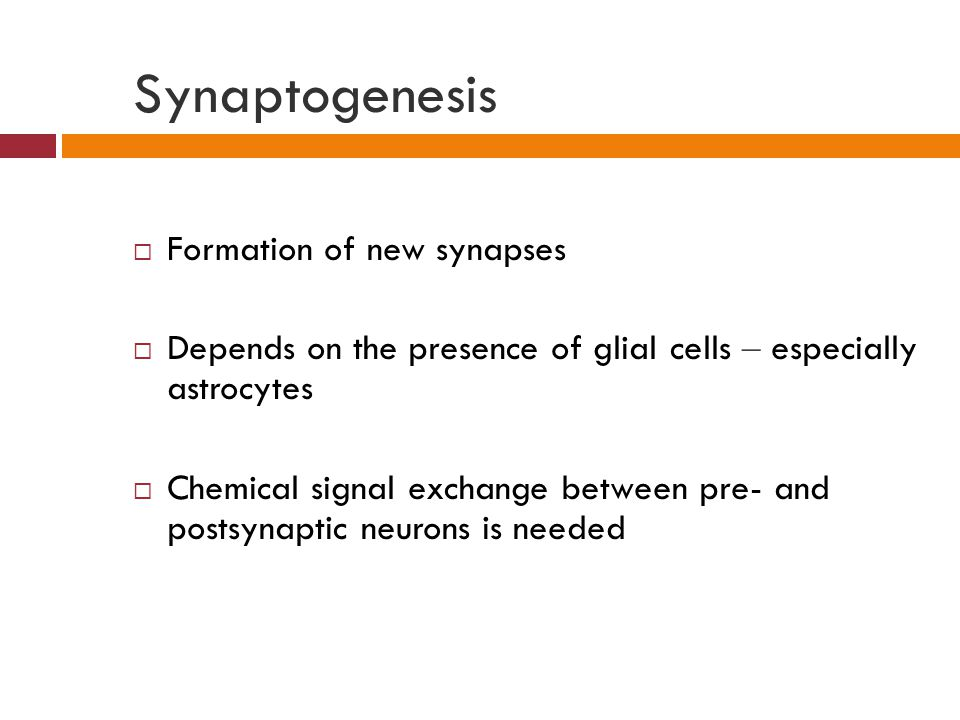 Synaptogenesis  Formation of new synapses  Depends on the presence of glial cells – especially astrocytes  Chemical signal exchange between pre- and postsynaptic neurons is needed