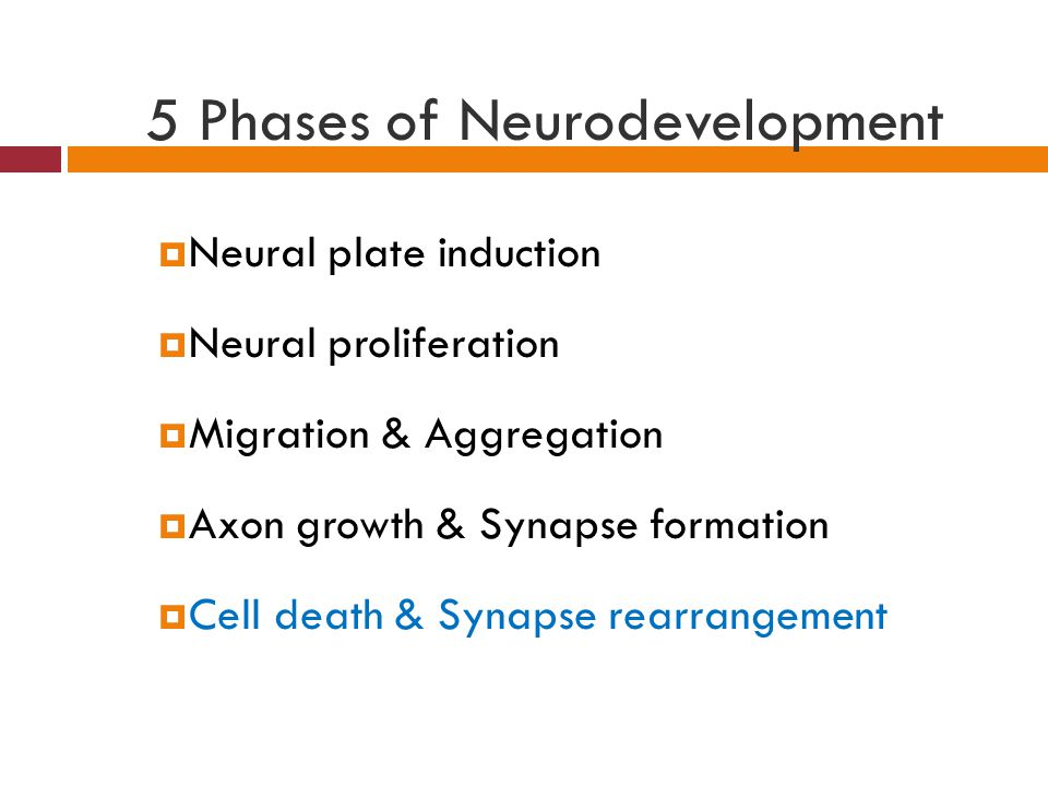 5 Phases of Neurodevelopment  Neural plate induction  Neural proliferation  Migration & Aggregation  Axon growth & Synapse formation  Cell death & Synapse rearrangement