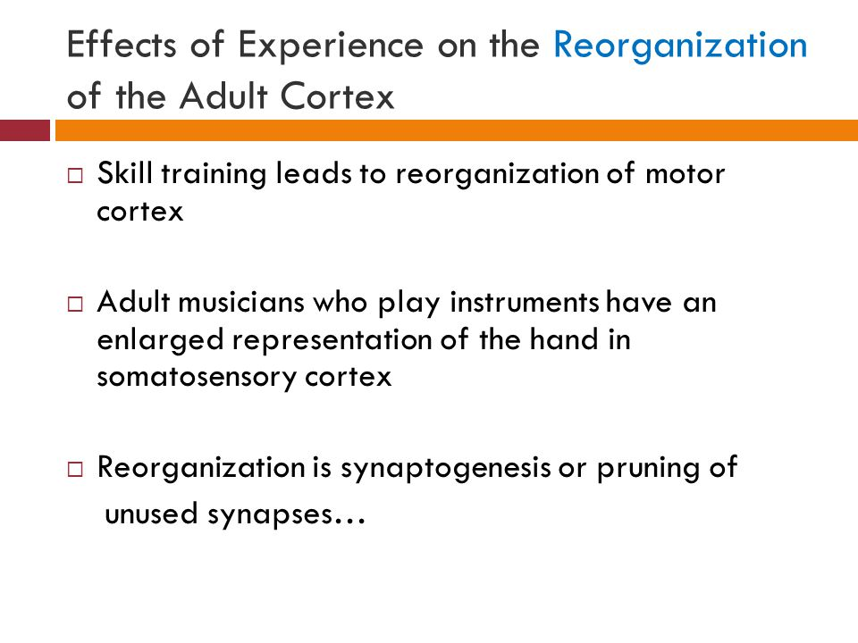 Effects of Experience on the Reorganization of the Adult Cortex  Skill training leads to reorganization of motor cortex  Adult musicians who play instruments have an enlarged representation of the hand in somatosensory cortex  Reorganization is synaptogenesis or pruning of unused synapses…