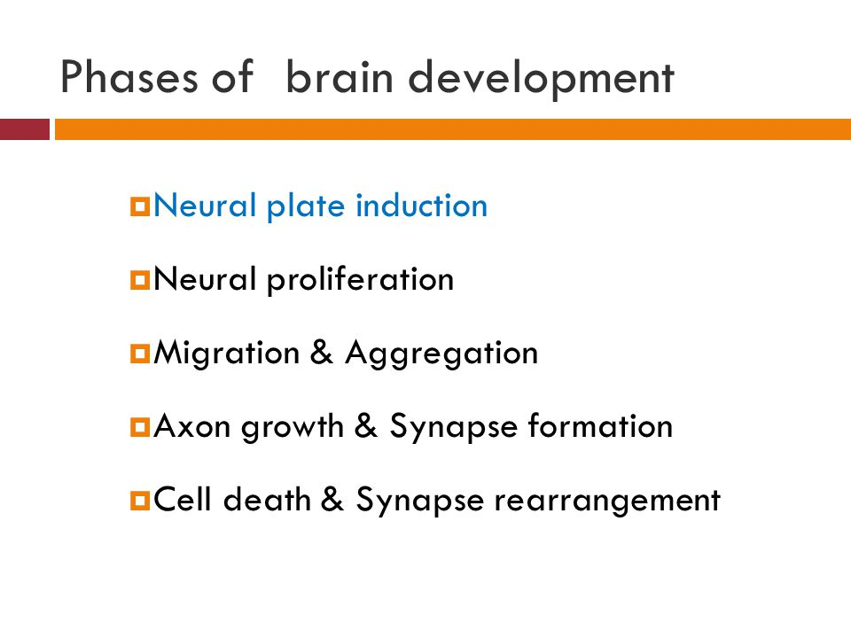 Phases of brain development  Neural plate induction  Neural proliferation  Migration & Aggregation  Axon growth & Synapse formation  Cell death & Synapse rearrangement