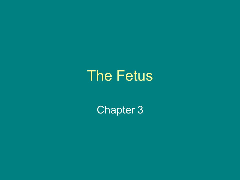 The Fetus Chapter 3