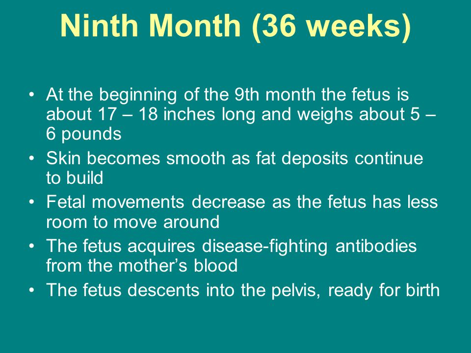 Ninth Month (36 weeks) At the beginning of the 9th month the fetus is about 17 – 18 inches long and weighs about 5 – 6 pounds Skin becomes smooth as fat deposits continue to build Fetal movements decrease as the fetus has less room to move around The fetus acquires disease-fighting antibodies from the mother's blood The fetus descents into the pelvis, ready for birth