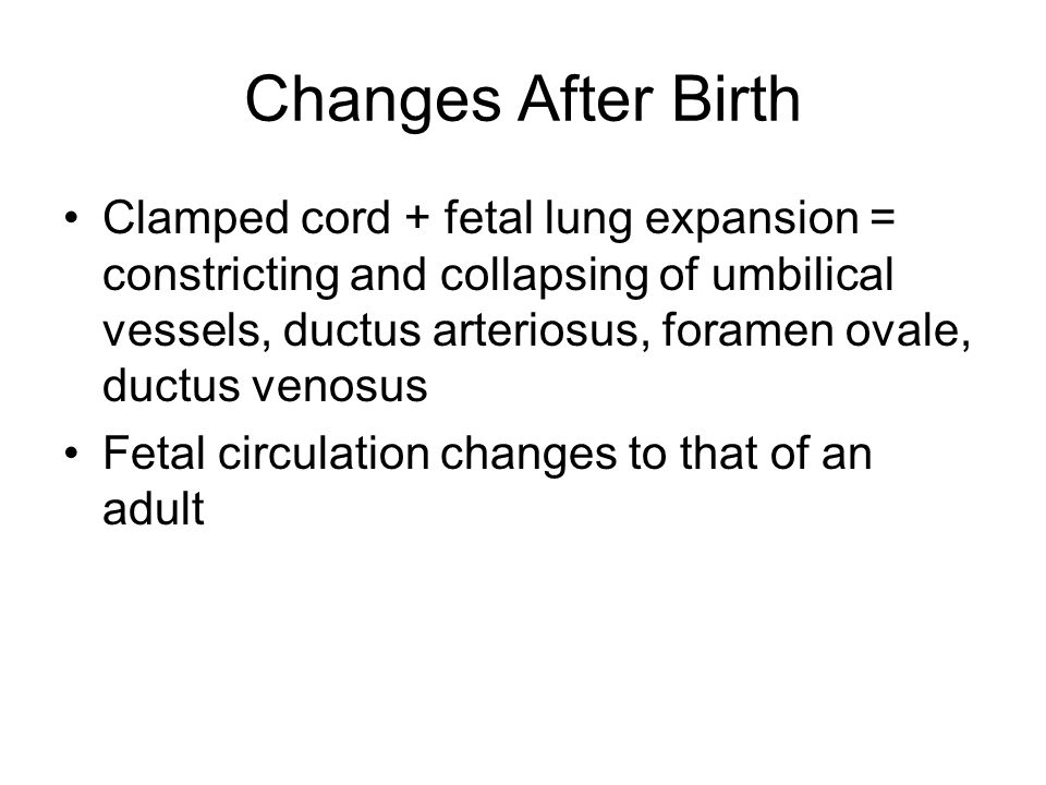 Changes After Birth Clamped cord + fetal lung expansion = constricting and collapsing of umbilical vessels, ductus arteriosus, foramen ovale, ductus v