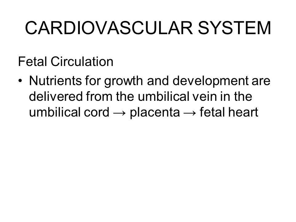 Fetal Circulation Oxygenated blood from mother ↓ (via umbilical vein) Liver Portal sinus Ductus venosus ↓ Inferior vena cava ( mixes with deoxygenated blood ) ↓ Right atrium