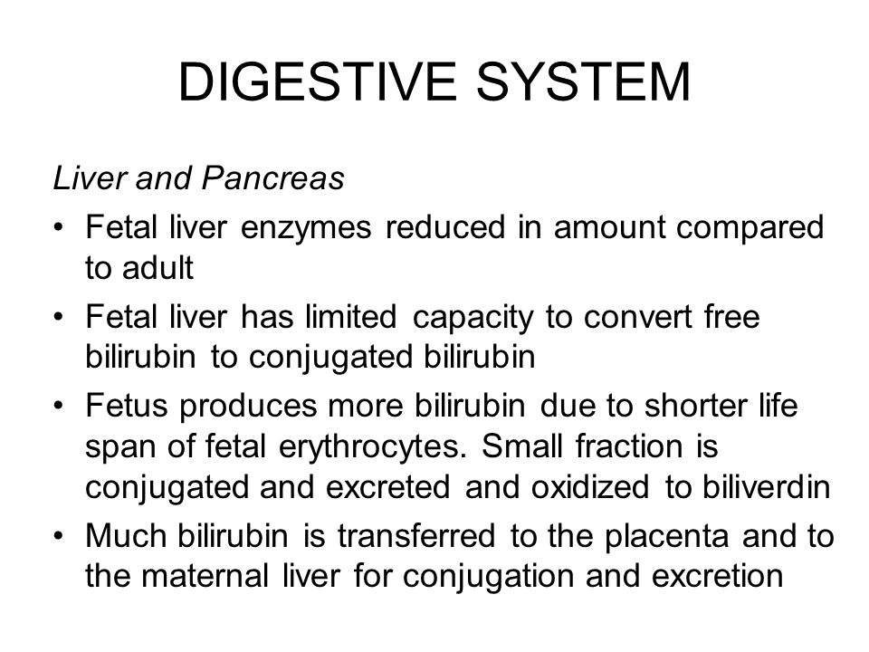 DIGESTIVE SYSTEM Liver and Pancreas Fetal liver enzymes reduced in amount compared to adult Fetal liver has limited capacity to convert free bilirubin
