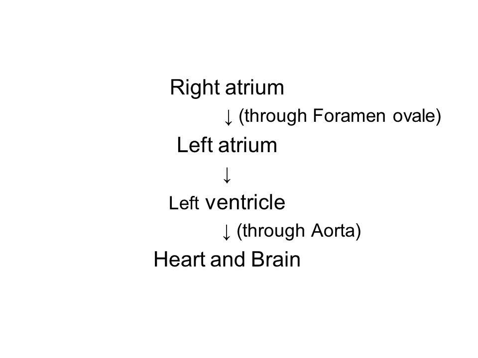 Deoxygenated blood from lower half of fetal body ↓ Inferior vena cava Right atrium ↓ Right ventricle Deoxygenated blood flowing through Superior vena cava