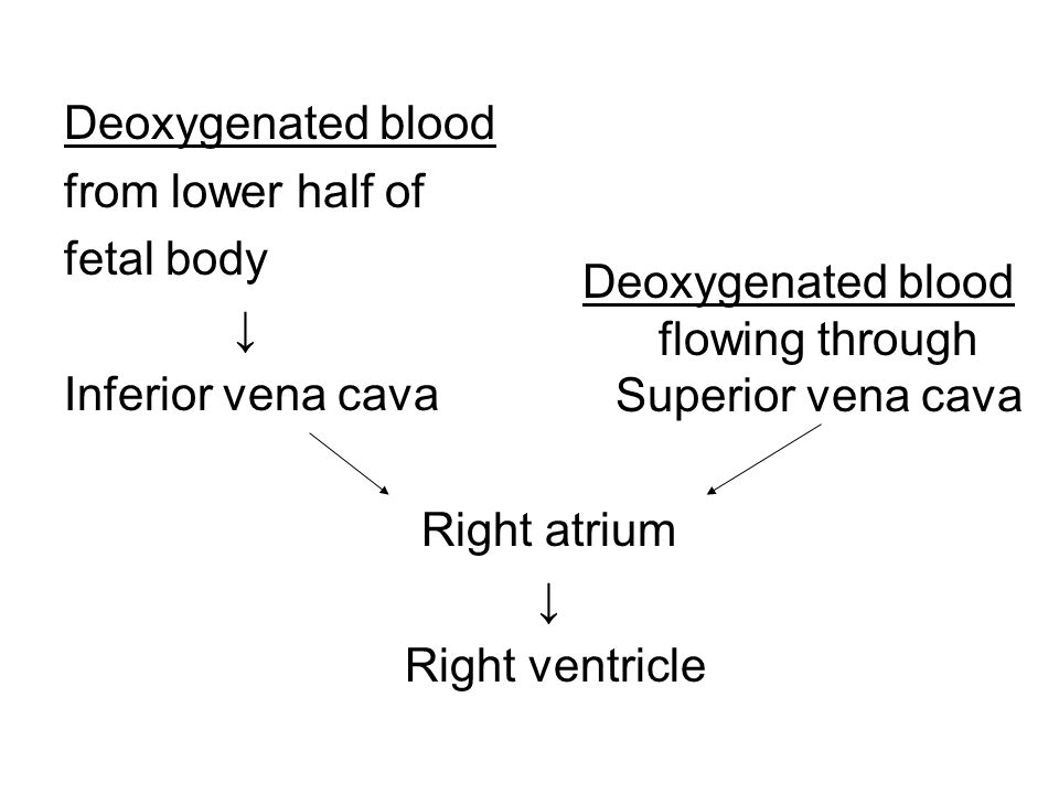 Fetal Blood Hematopoiesis Fetal erythrocytes: 2/3 that of adult's (due to large volume and more easily deformable) During states of fetal anemia: fetal liver synthesizes erythropoietin and excretes it into the amniotic fluid.
