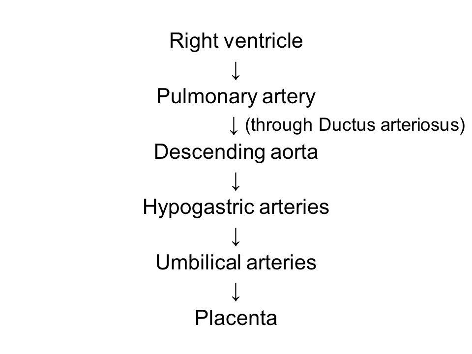 Right ventricle ↓ Pulmonary artery ↓ (through Ductus arteriosus) Descending aorta ↓ Hypogastric arteries ↓ Umbilical arteries ↓ Placenta