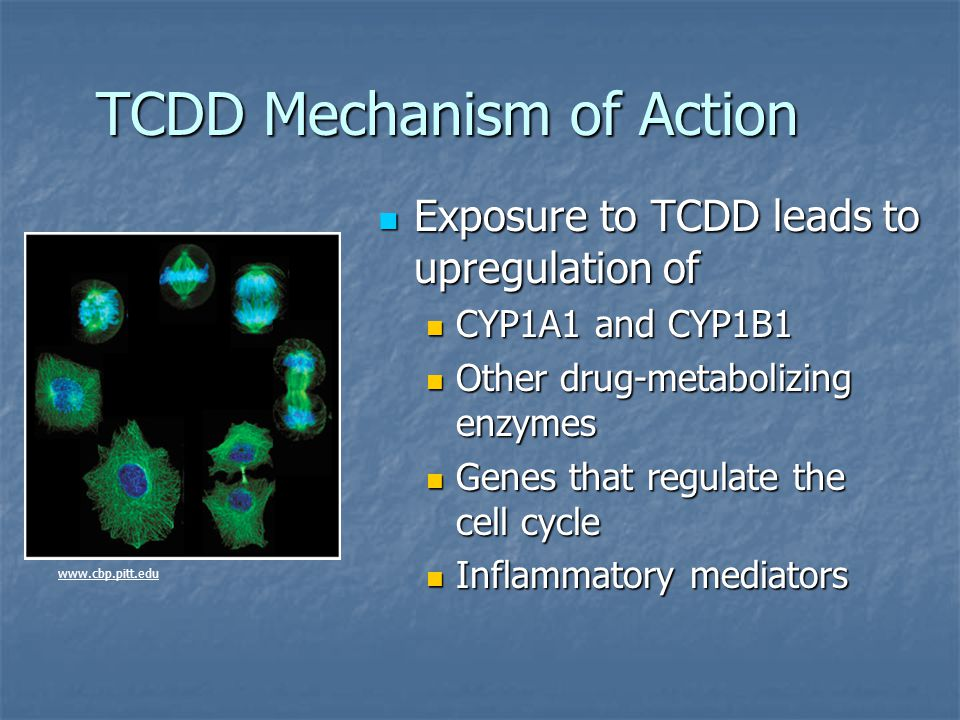 TCDD Mechanism of Action Exposure to TCDD leads to upregulation of Exposure to TCDD leads to upregulation of CYP1A1 and CYP1B1 CYP1A1 and CYP1B1 Other