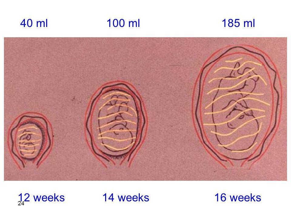 24 12 weeks14 weeks16 weeks 40 ml100 ml185 ml