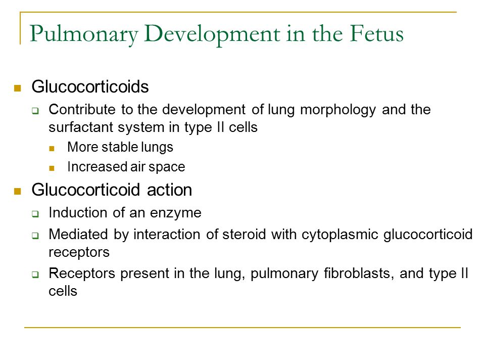 Pulmonary Development in the Fetus Glucocorticoids  Contribute to the development of lung morphology and the surfactant system in type II cells More stable lungs Increased air space Glucocorticoid action  Induction of an enzyme  Mediated by interaction of steroid with cytoplasmic glucocorticoid receptors  Receptors present in the lung, pulmonary fibroblasts, and type II cells