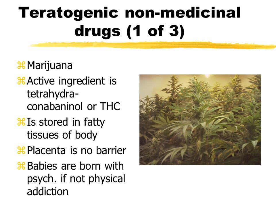 Teratogenic non-medicinal drugs (1 of 3) zMarijuana zActive ingredient is tetrahydra- conabaninol or THC zIs stored in fatty tissues of body zPlacenta