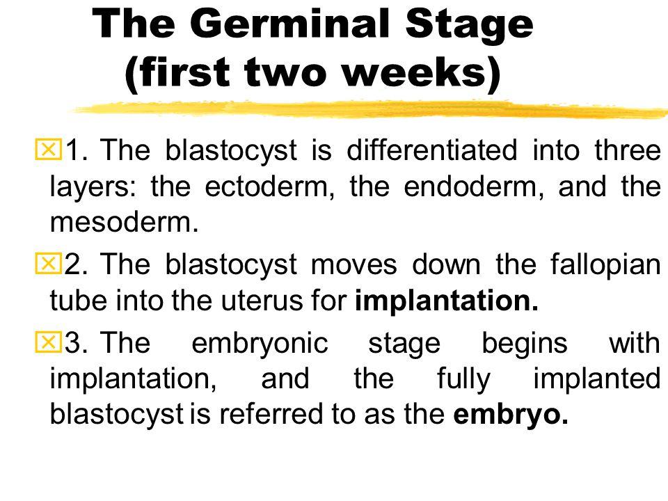 Blastocyst at day six