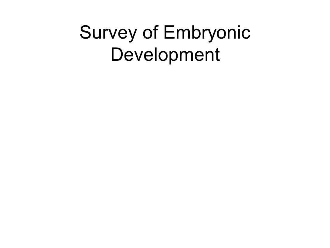 Survey of Embryonic Development