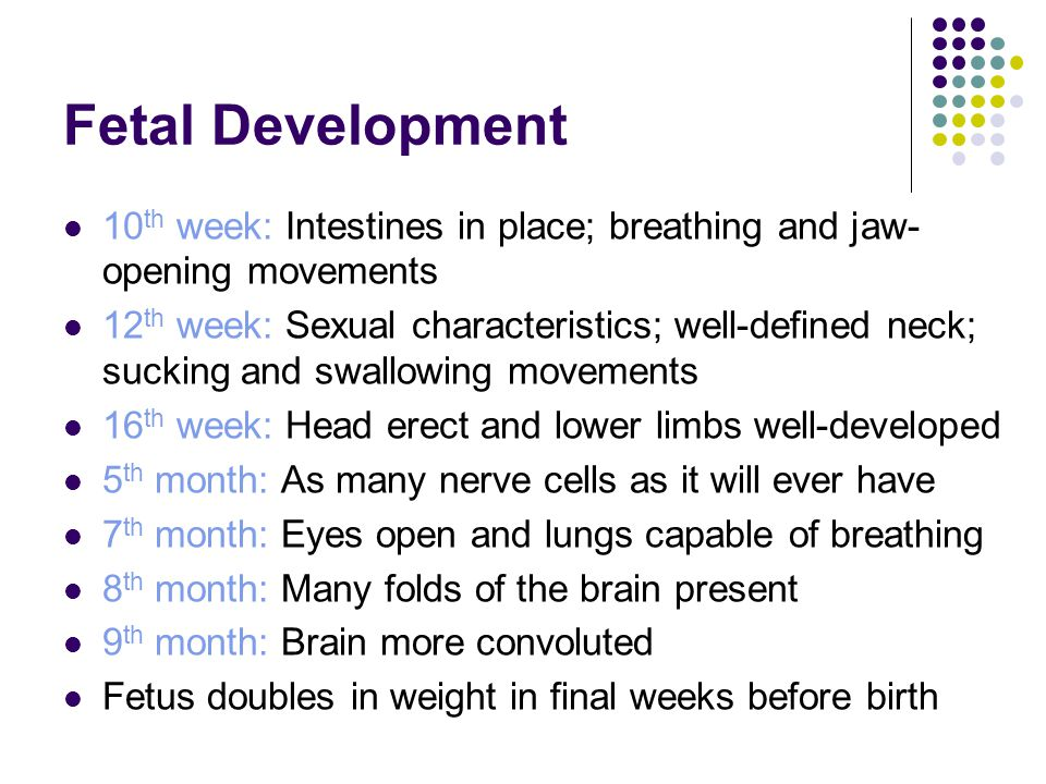 Fetal Development 10 th week: Intestines in place; breathing and jaw- opening movements 12 th week: Sexual characteristics; well-defined neck; sucking