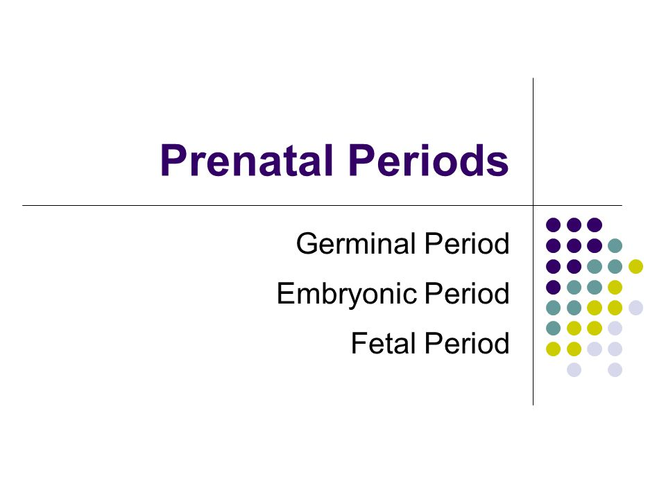 Prenatal Periods Germinal Period Embryonic Period Fetal Period