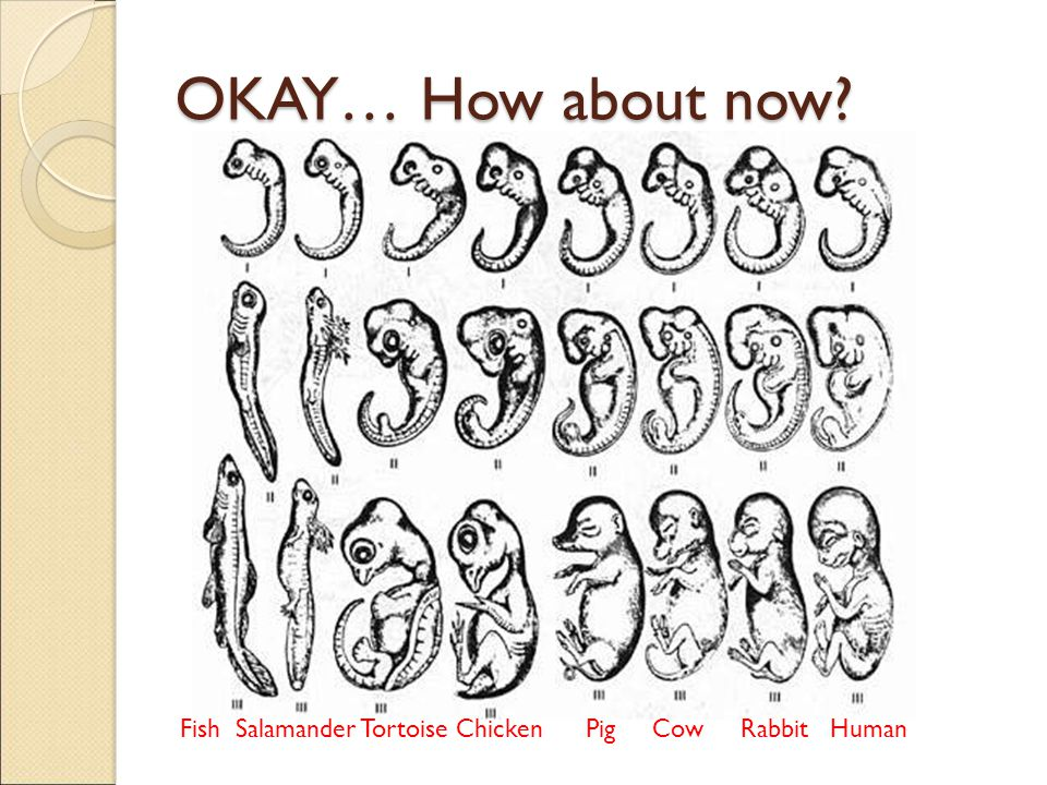 OKAY… How about now? Fish Salamander Tortoise Chicken Pig Cow Rabbit Human