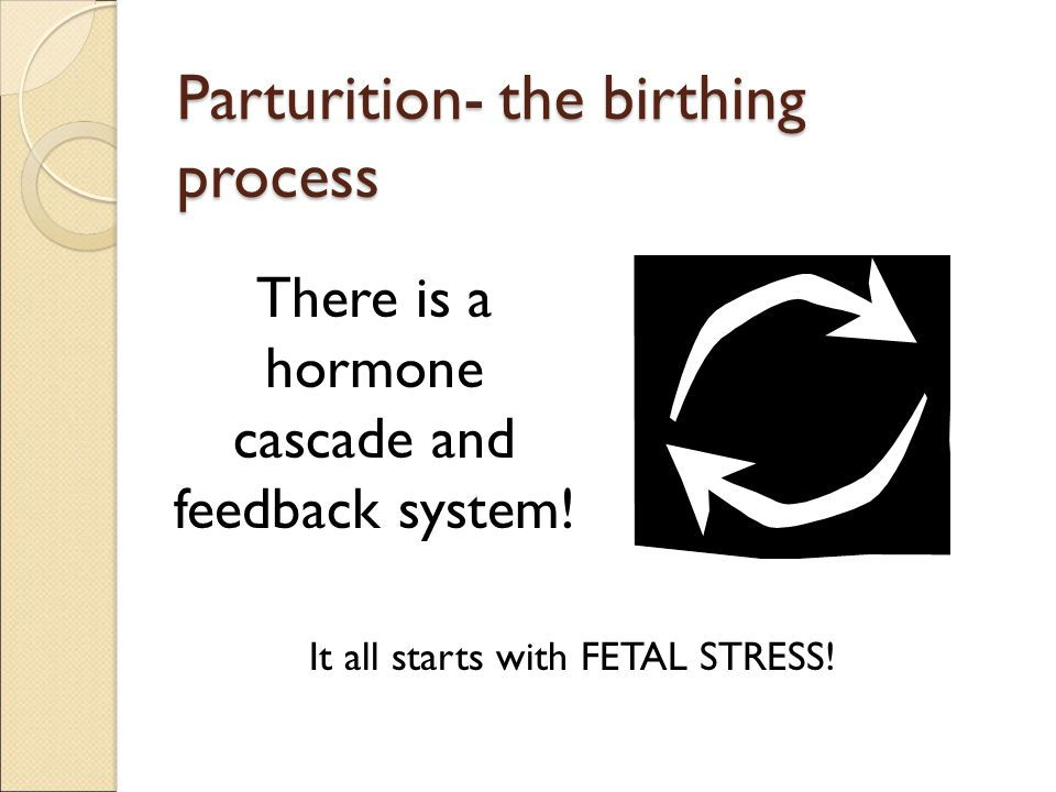 Parturition- the birthing process There is a hormone cascade and feedback system! It all starts with FETAL STRESS!